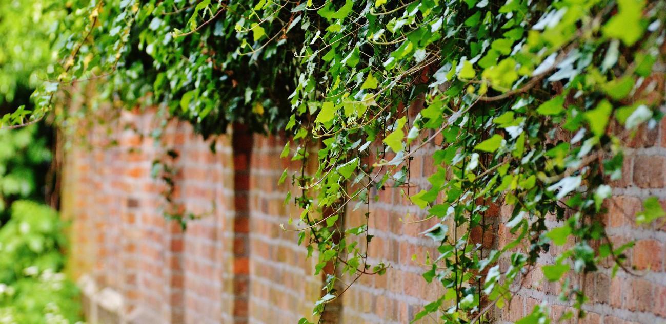 wall-1453158