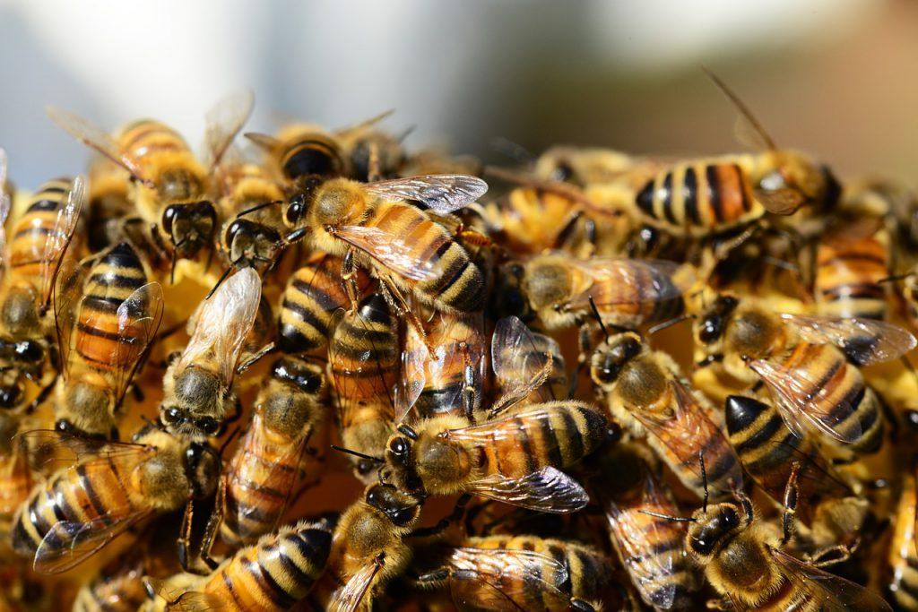 https://pixabay.com/en/honey-bees-beehive-honey-bees-326334/